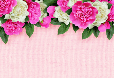Pink and white peonies flowers header isolated on white stock photo pink and white peonies flowers header isolated on white stock photo 65316715 mightylinksfo