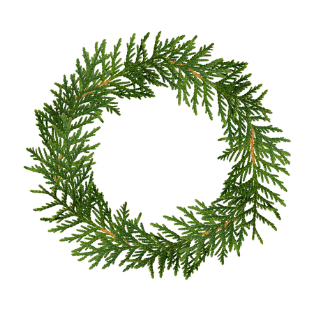 thuja: Christmas wreath from thuja twigs isolated on white
