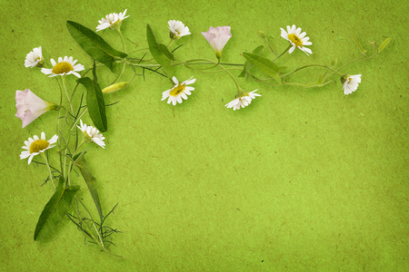 Bindweed and daisy flowers with card isolated on white Stock Photo