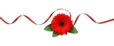 Red silk ribbon and gerbera flower isolated on white