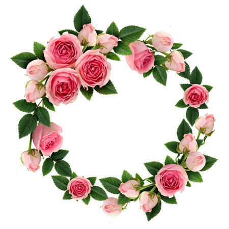 Pink rose flowers and buds circle frame isolated on white. Flat lay, top view. Stock fotó