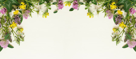 Wild flowers frame on white paper background. Top view, flat lay.