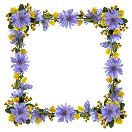 Wilde bloemen in een frame dat op wit wordt geïsoleerd. Plat leggen. Bovenaanzicht.