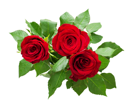 Three red rose flowers bouquet isolated on white Stock Photo