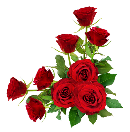 Red rose flowers with leaves in a corner arrangement isolated on white. Top view. Stock Photo