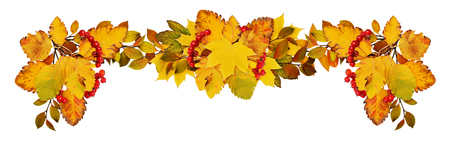 Autumn leaves and red berries in a border arrangement isolated on white background. Flat lay. Top view.