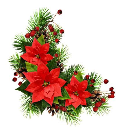 Kerstmisregeling met van pijnboomtwijgen, kegels, bessen en ponsettia bloemen op witte achtergrond worden geïsoleerd die. Plat leggen. Bovenaanzicht.