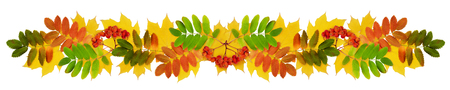 sorb: Clolrful autumn maple and rowan leaves and berries in a garland isolated on white. Fall composition. Stock Photo