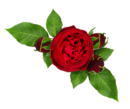 Red rose flowers and buds arrangement isolated on white background. Top view. Stock Photo