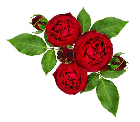 赤いバラの花とつぼみの配置は、白の背景に分離しました。トップビュー。フラットレイ。