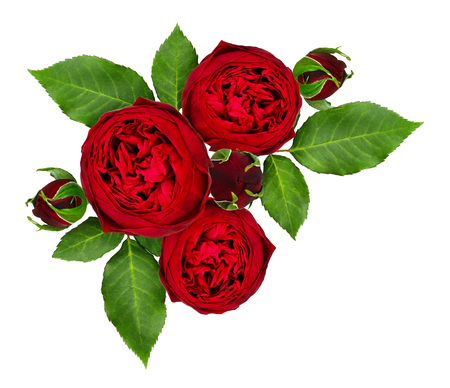 Red rose flowers and buds composition isolated on white background. Top view. Flat lay.