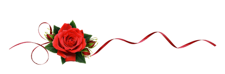 Red rose flowers and silk ribbon in a line arrangement isolated on white background.