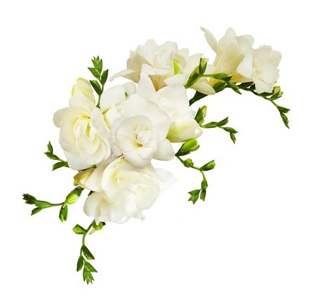 Witte fresiabloemen in een mooie die samenstelling op witte achtergrond wordt geïsoleerd