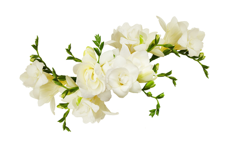 White freesia flowers in a beautiful arrangment isolated on white background Banco de Imagens