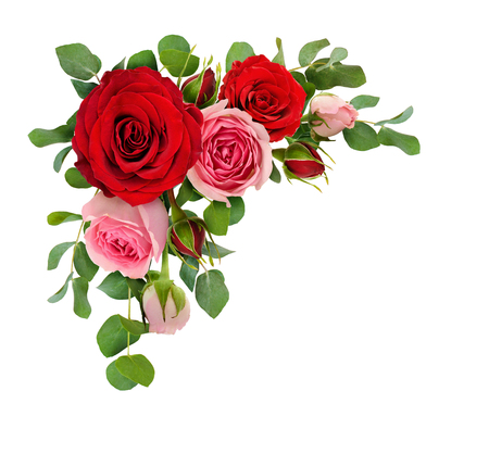 Red and pink rose flowers with eucalyptus leaves in a corner arrangement isolated on white background. Flat lay. Top view. Stockfoto