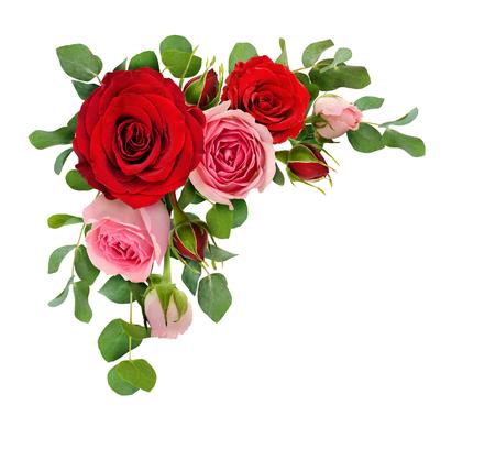 Rot- und Rosarosenblumen mit Eukalyptus verlässt in einer Eckanordnung, die auf weißem Hintergrund lokalisiert wird. Flach liegen. Ansicht von oben.
