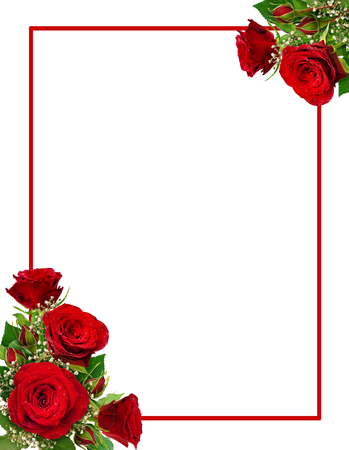 Corner arrangements with red roses and gypsophila flowers and buds and isolated on white background. Flat lay. Top view.
