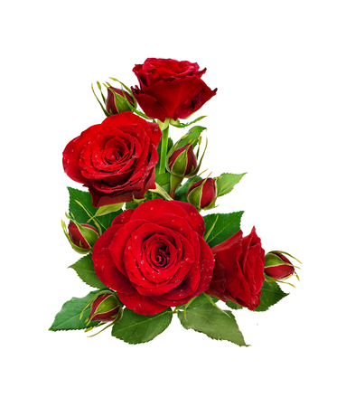 Corner composition with red rose flowers and buds isolated on white background. Flat lay. Top view.