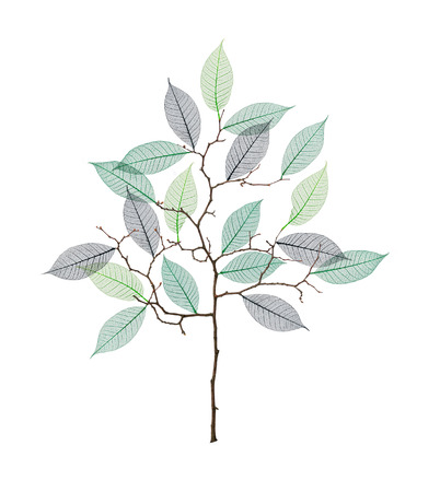 Stylized tree with twigs and skeleton of leaves isolated on white