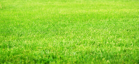 Green fileld of grass with selective fokus for background Stock Photo