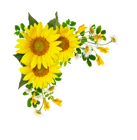 Sunflowers, daisies and acacia flowers in a corner arramgement isolated on white background. Flat lay. Top view.
