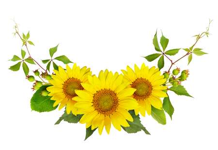 Sonnenblumen, grüne Beeren und Blätter der wilden Traube in einem Sommerarrangement lokalisiert auf weißem Hintergrund. Flach liegen. Draufsicht.