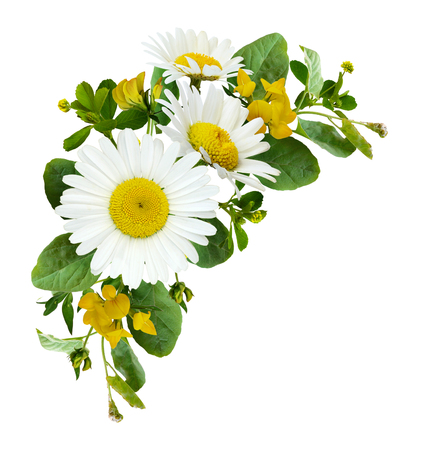 Daisy flowers and wild grass in a summer corner arrangement isolated on white background. Flat lay. Top view. Banco de Imagens