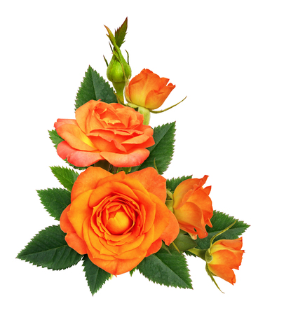 Orange rose flowers in a corner floral arrangement isolated on white