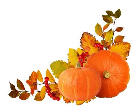 Two orange pumpkins, hawthorn berries and autumn leaves in corner arrangement isolated on white background