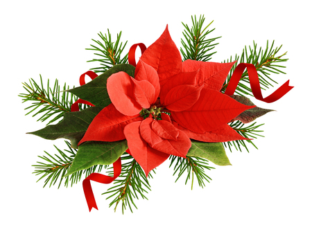 Red poinsettia flower and twigs of Christmas tree with satin ribbons isolated on white background Stock fotó