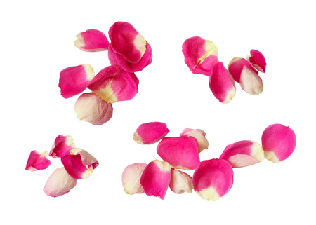 Set of pink rose petals isolated on white background. Top view. Flat lay.