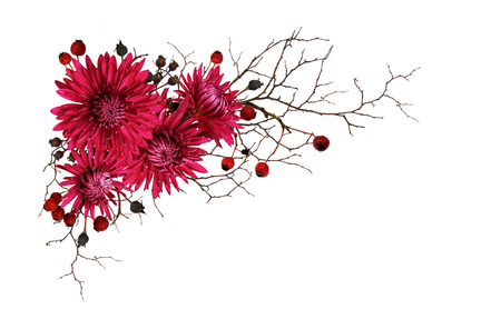 Purple chrysanthemum flowers and autumn dry twigs with berries in a corner arrangement isolated on white background. Top view. Flat lay.