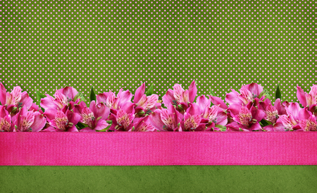 Pink alstroemeria flowers border with silk ribbon on green polka dot background