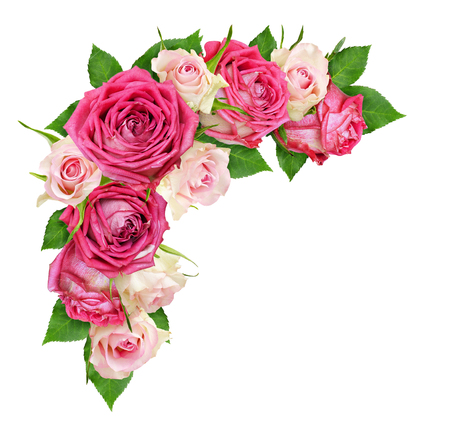 Beautiful pink and white rose flowers in a corner arrangement isolated on white. Top view. Flat lay. Stock Photo
