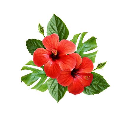 Hibiskusblüten und Monstera-Blätter in einer tropischen Anordnung isoliert auf weiß Standard-Bild