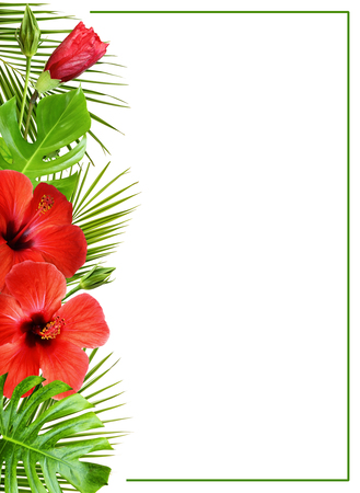 Hibiscus flowers and palm leaves in tropical border arrangement isolated on white background