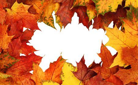 Marco con hojas de colores otoñales aisladas sobre fondo blanco. Vista superior. Endecha plana.