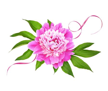 Pink peony flower with green leaves and silk ribbon in a floral arrangement isolated on white