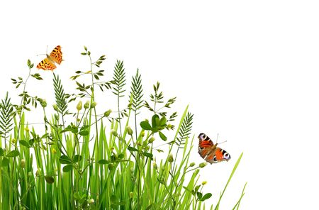 Wild green grass and butterflies isolated on white background