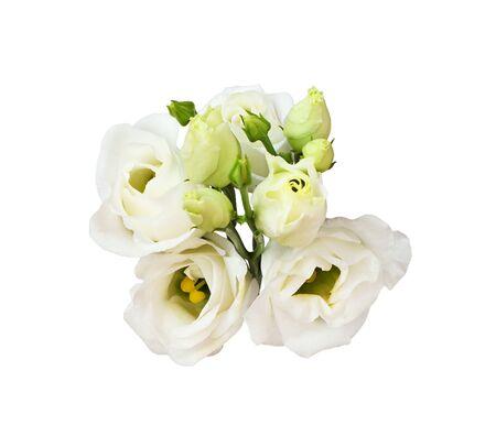 Ramita de flores y capullos de eustoma aislado en blanco Foto de archivo