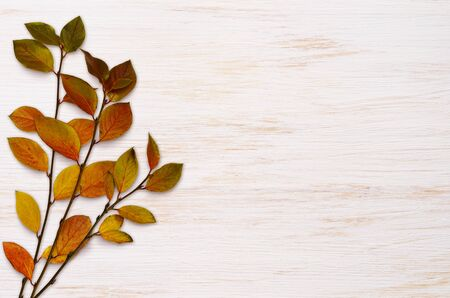 White painted wooden board with autumn colorful leaves for background 写真素材
