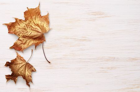 White painted wooden board with autumn colorful leaves for background Reklamní fotografie