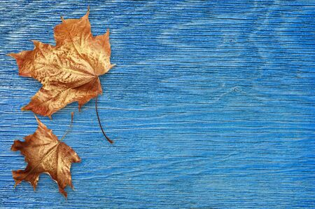 Blue painted wooden board with autumn golden leaves for background