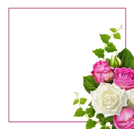 Pink and white rose flowers with ivy green leaves in a corner arrangement and a frame isolated on white background