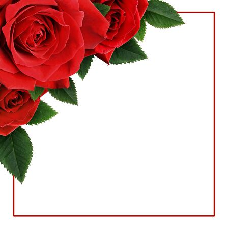 Red rose flowers in a corner arrangement with square frame isolated on white background