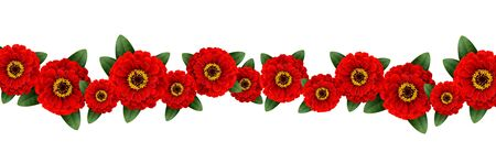Red zinnia flowers garland isolated on white background