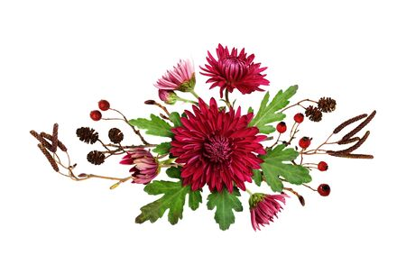Purple chrysanthemum flowers and autumn dry twigs in a line arrangement isolated on white background. Top view. Flat lay. Фото со стока