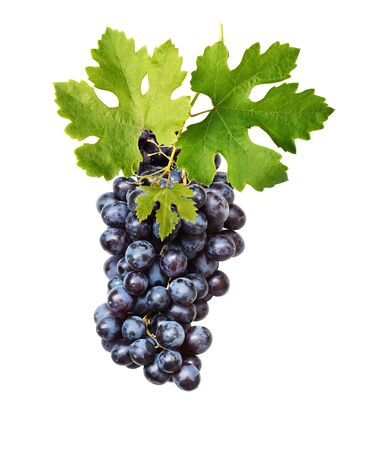 Bunch of blue grapes with green leaves isolated on white