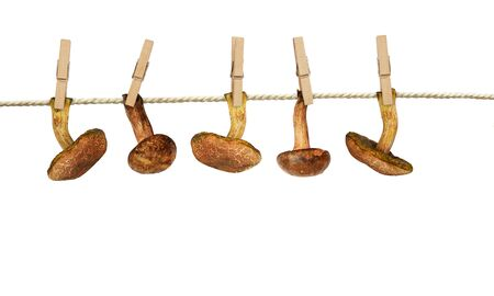 Autumn forest mushrooms with wooden pins hang and dry on cotton rope isolated on white background