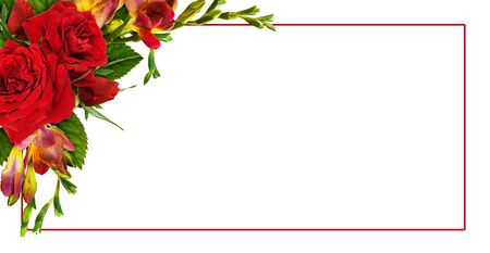 Red roses and freesia flowers in a floral corner arrangement with a frame isolated on white background Stock Photo